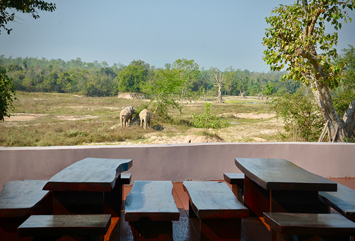 Amazing view of elephants and other wildlife from the eco-lodge.